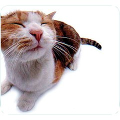 Mouse Pad, Cat - Part Number: 90D5-01111