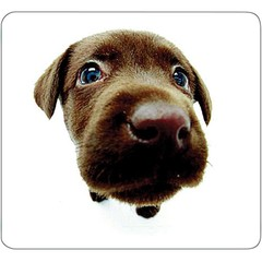 Mouse Pad, Lab Puppy - Part Number: 90D5-01112